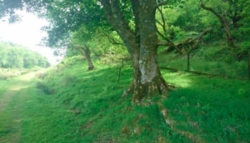 Ruaris distinctive tree