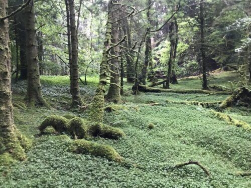 Glencoe Lochan woods