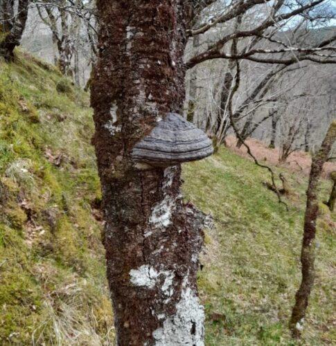 Bracket Fungus in Glen Nant