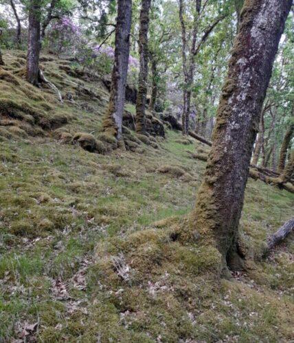 Runnable woodland