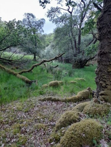 Ancient woodland and marsh